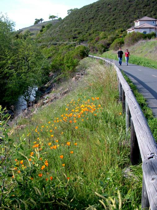 The Los Alamitos Creek Trail near Pfeiffer Ranch Road